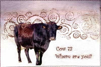 cow-73.jpg