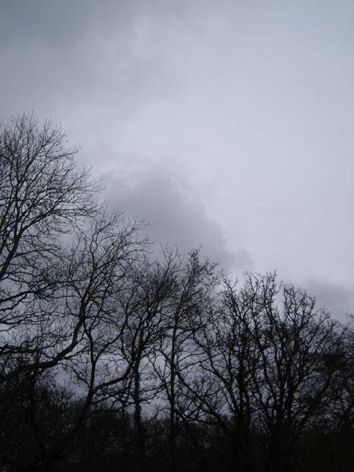 winter-branches.jpg