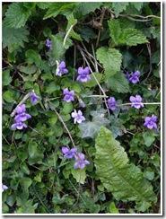 violetbank1
