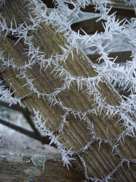 frostywire
