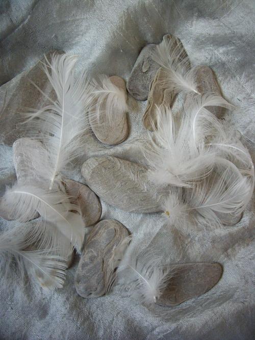 stone & feathers