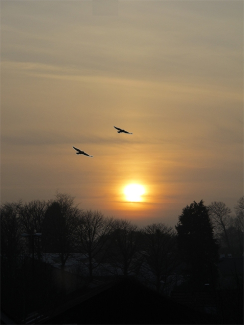 Setting sun with jackdaws