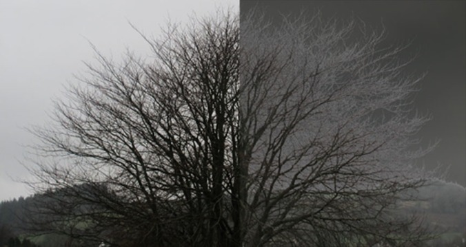 Equinox Tree