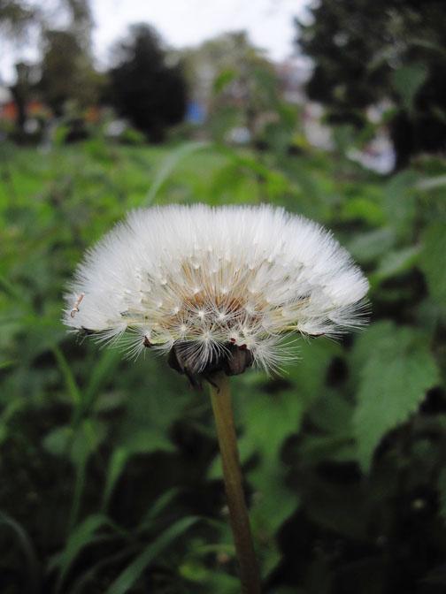 full_flower4