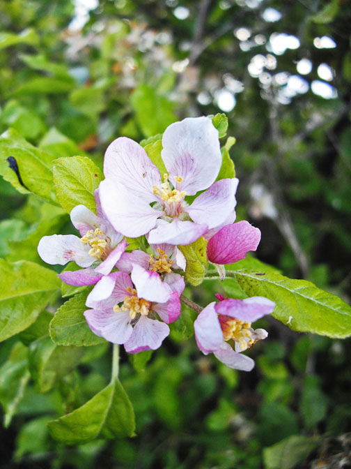 full_flower7