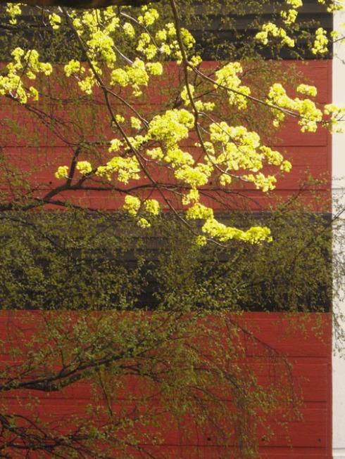 spring green1