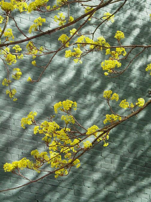 spring green2