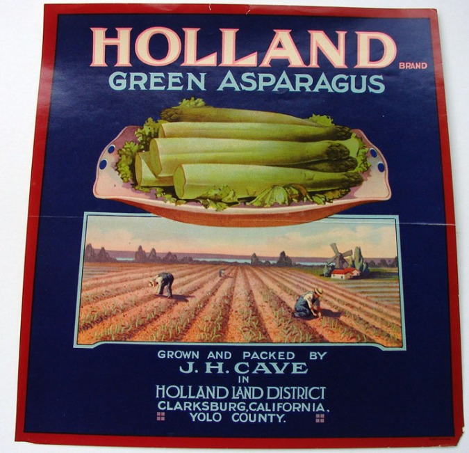 asparagus_holland