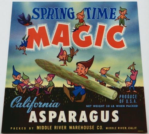 asparagus_springtime magic