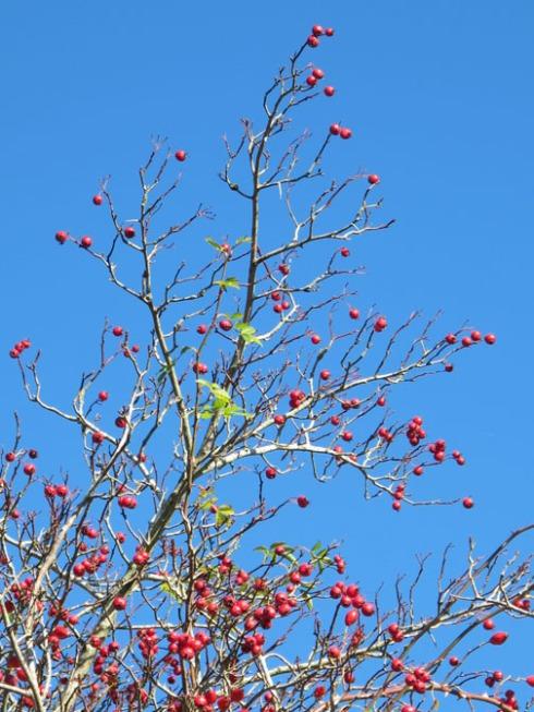 solstice tree6