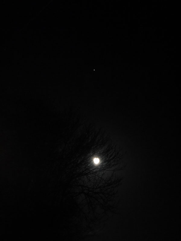 Day 22 - Winter tree and moon